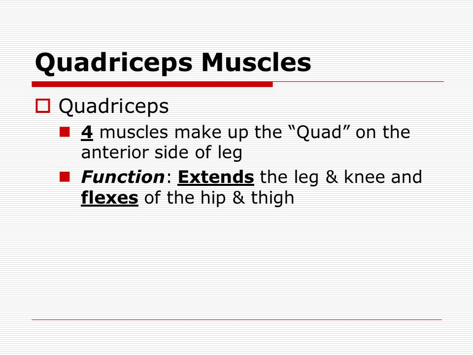 Quadriceps Muscles Quadriceps