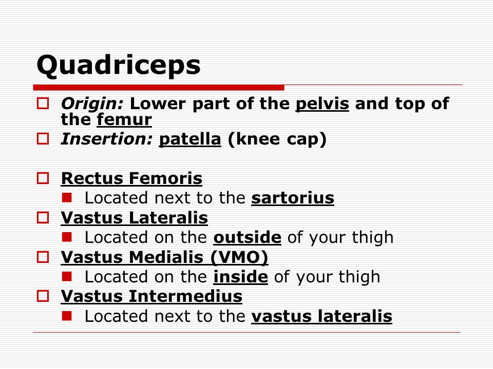 Quadriceps Origin: Lower part of the pelvis and top of the femur