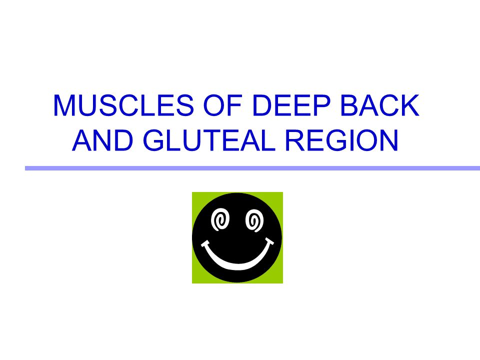MUSCLES OF DEEP BACK AND GLUTEAL REGION
