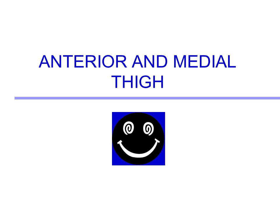 ANTERIOR AND MEDIAL THIGH