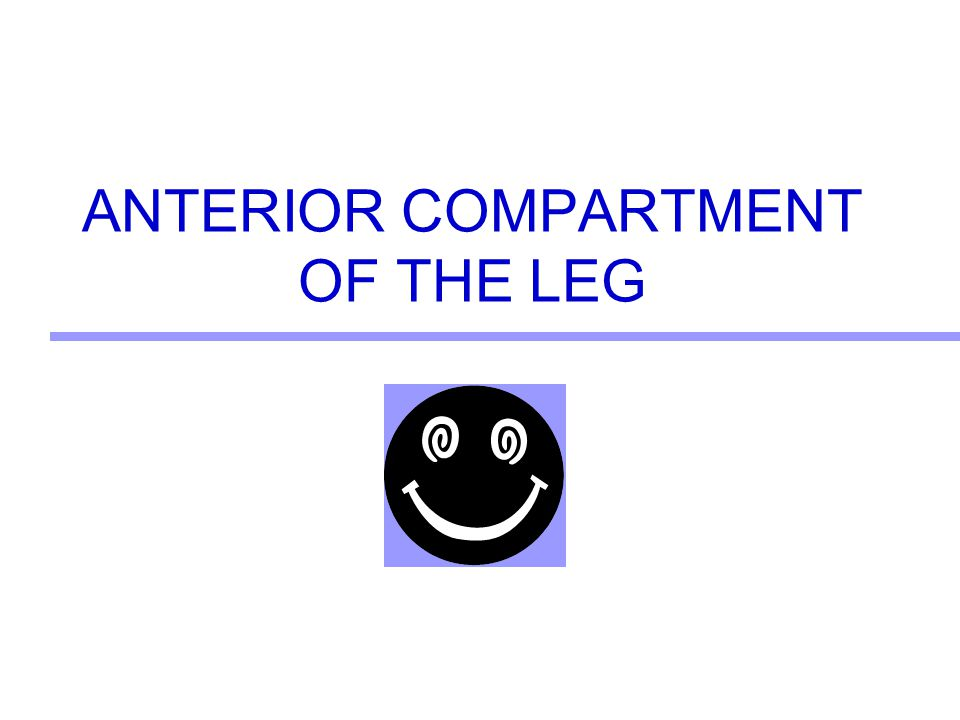 ANTERIOR COMPARTMENT OF THE LEG
