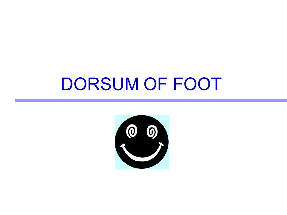 DORSUM OF FOOT