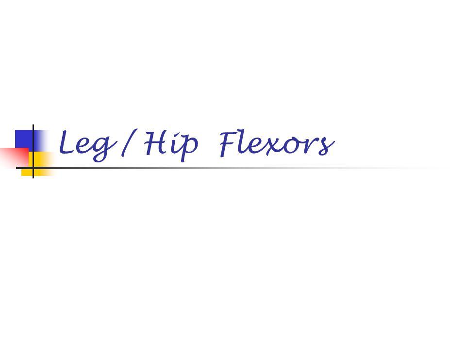 Leg / Hip Flexors