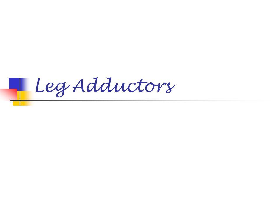 Leg Adductors