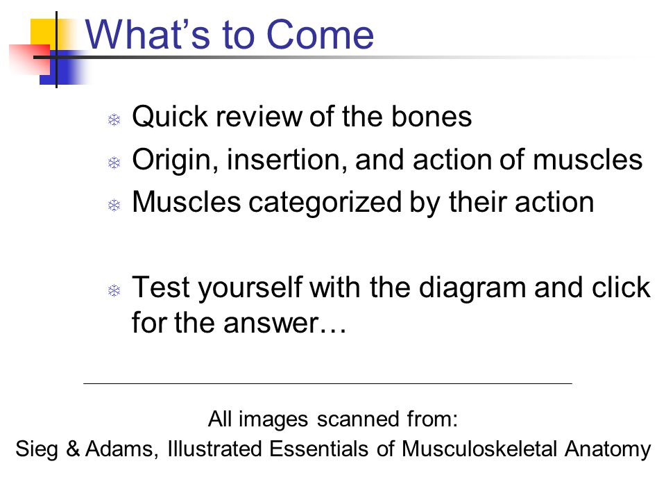 What's to Come Quick review of the bones