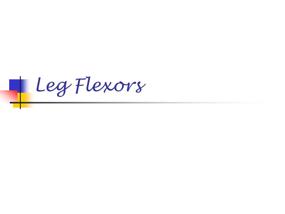 Leg Flexors