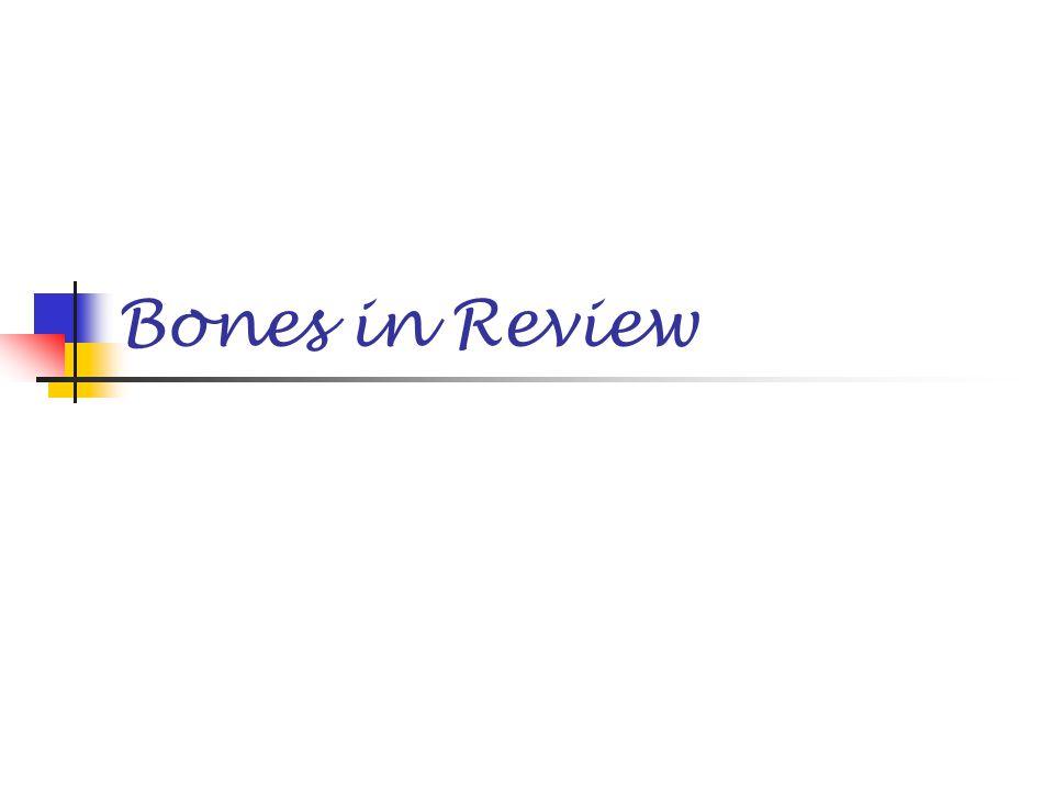 Bones in Review