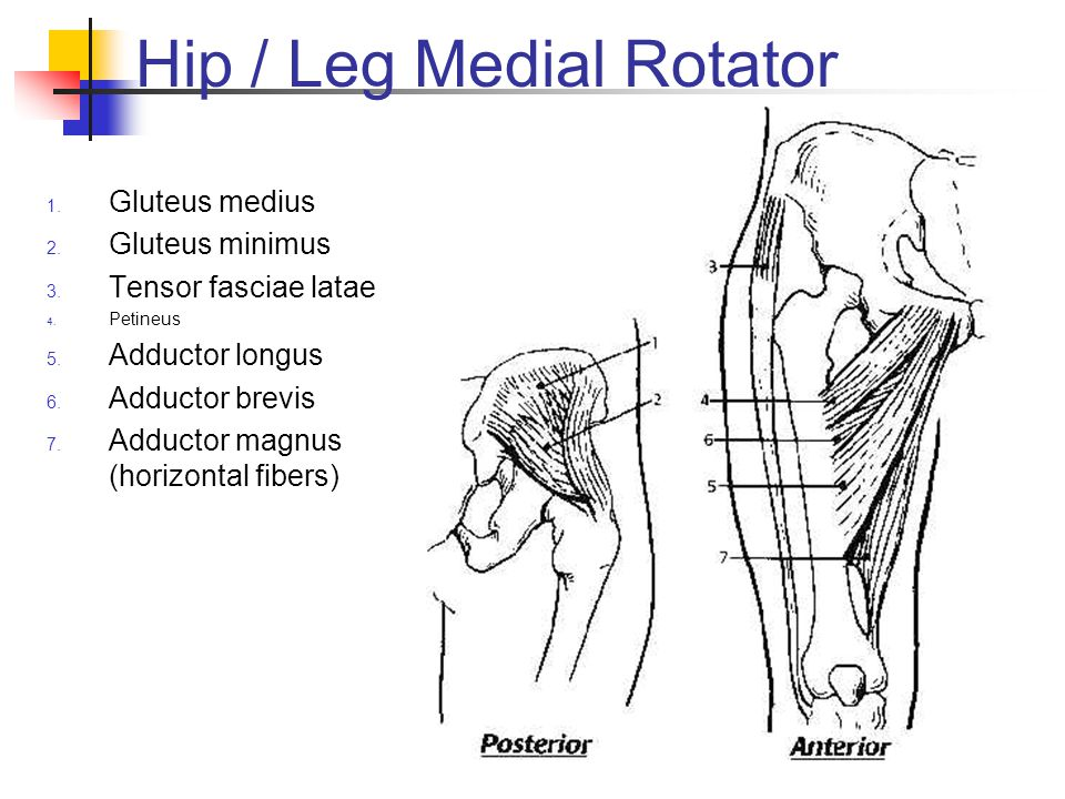 Hip / Leg Medial Rotator