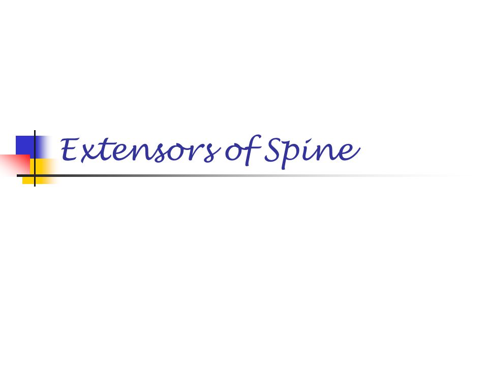 Extensors of Spine
