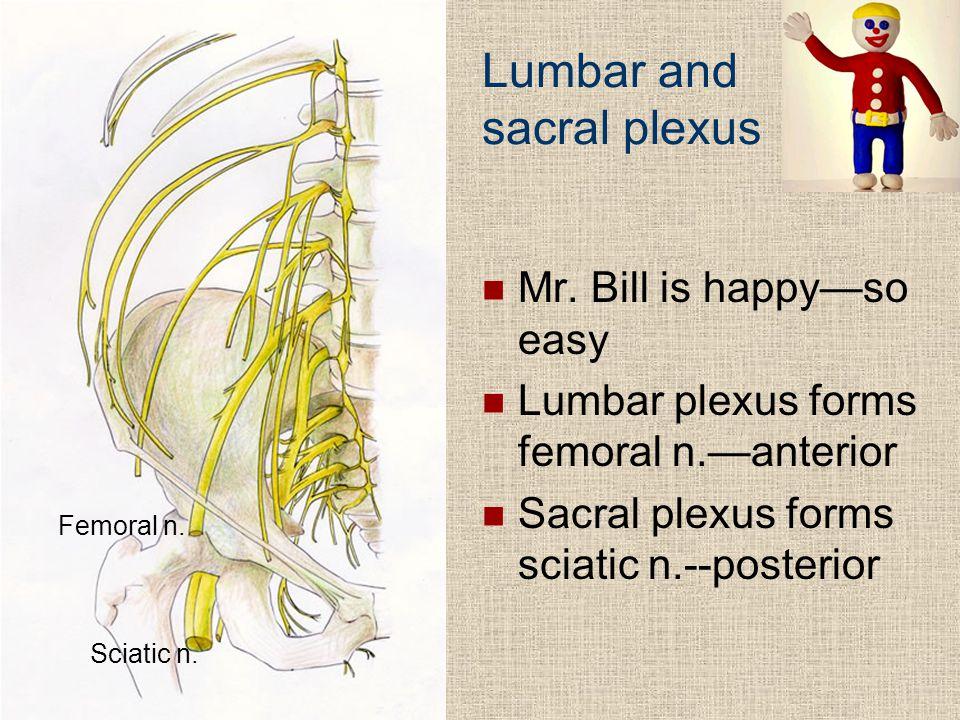 Lumbar and sacral plexus