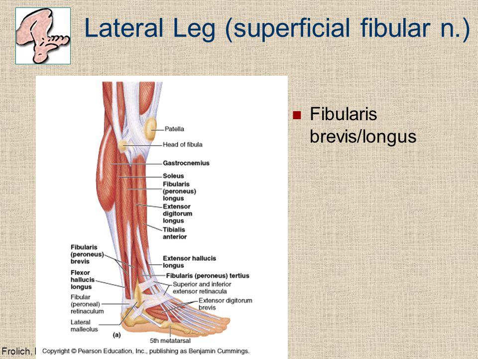 Lateral Leg (superficial fibular n.)