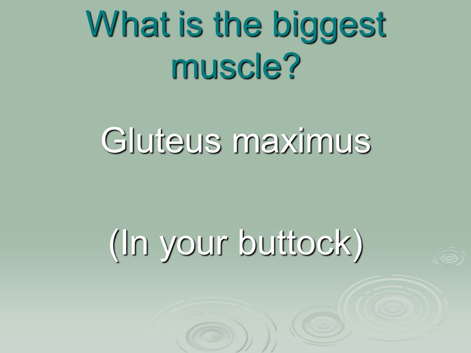 What is the biggest muscle