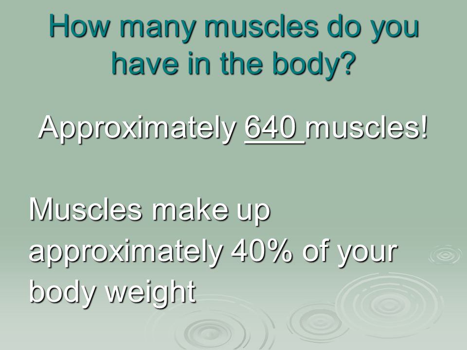 How many muscles do you have in the body