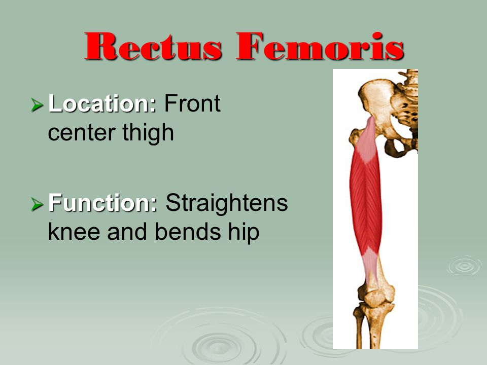 Rectus Femoris Location: Front center thigh