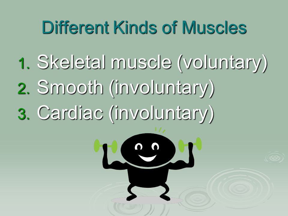 Different Kinds of Muscles