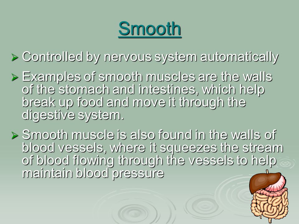 Smooth Controlled by nervous system automatically