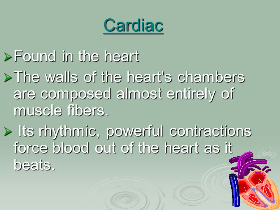 Cardiac Found in the heart