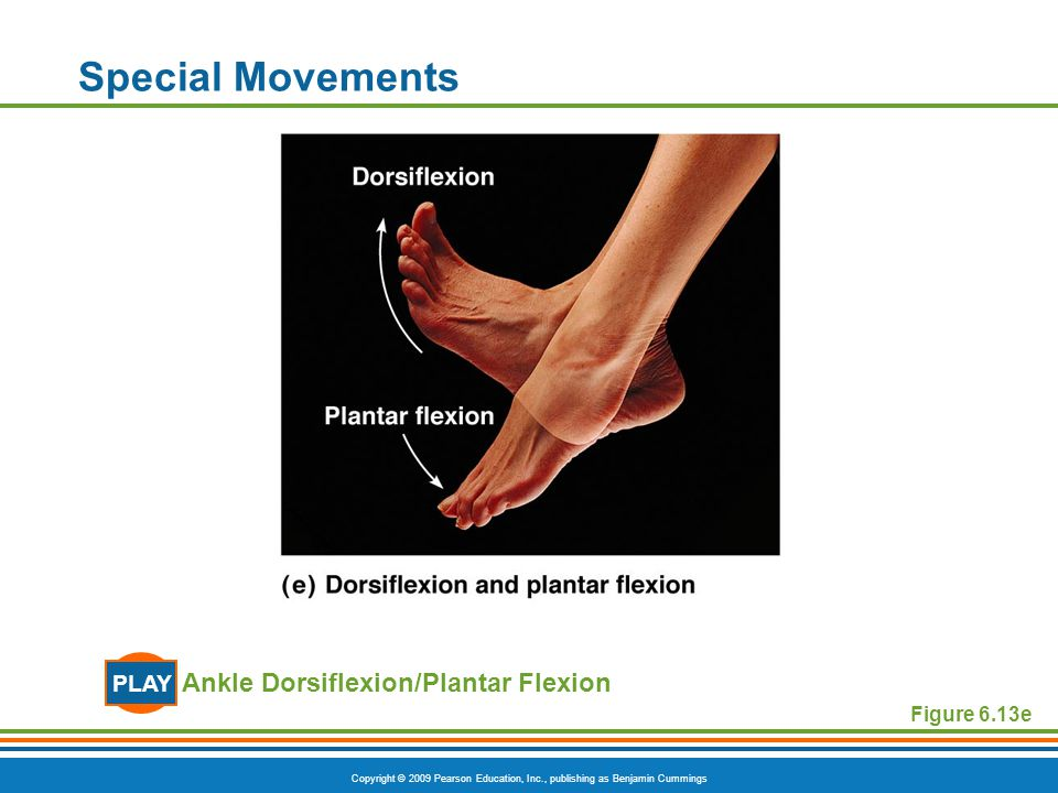 Special Movements PLAY Ankle Dorsiflexion/Plantar Flexion Figure 6.13e