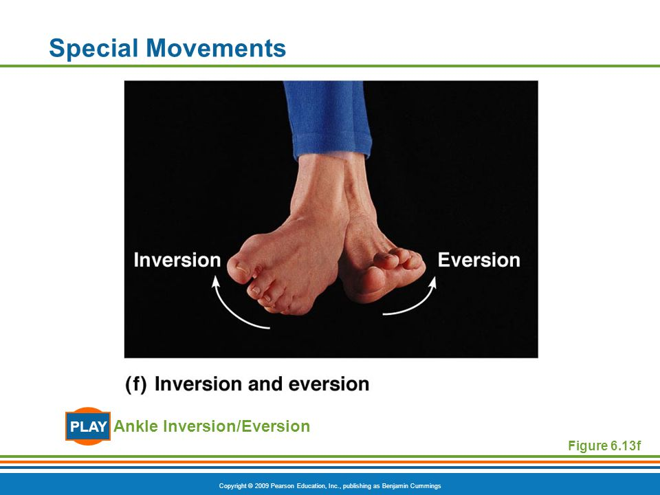 Special Movements PLAY Ankle Inversion/Eversion Figure 6.13f