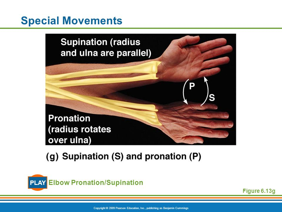 Special Movements PLAY Elbow Pronation/Supination Figure 6.13g