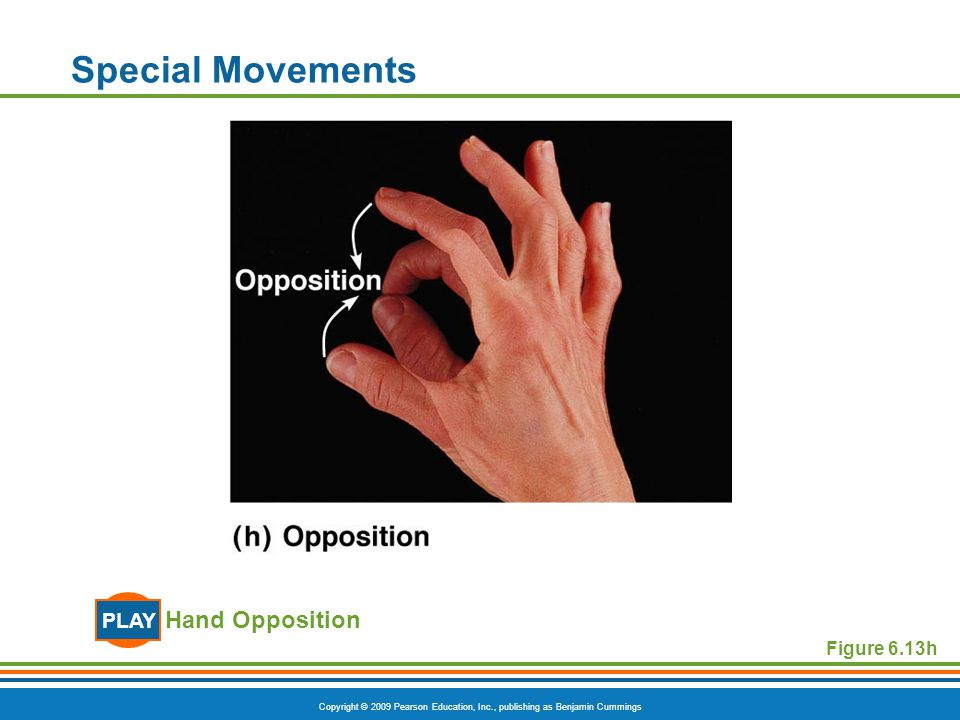 Special Movements PLAY Hand Opposition Figure 6.13h