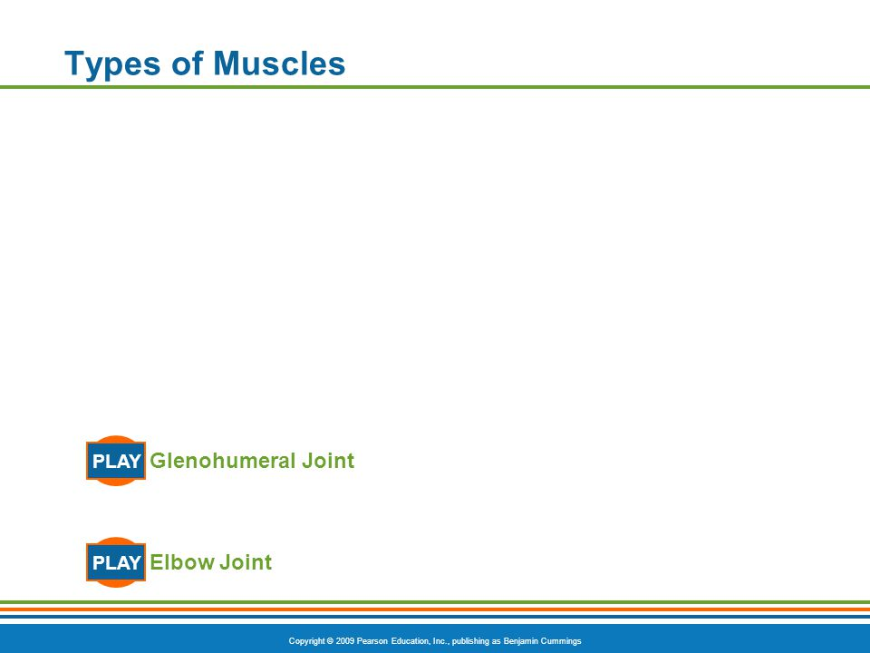 Types of Muscles PLAY Glenohumeral Joint PLAY Elbow Joint