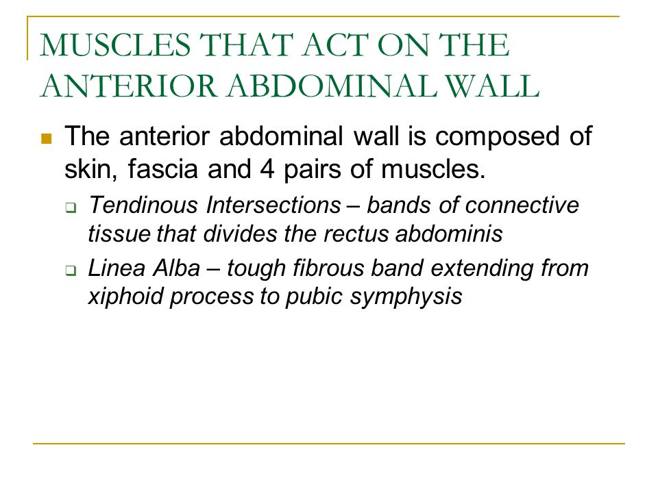 MUSCLES THAT ACT ON THE ANTERIOR ABDOMINAL WALL
