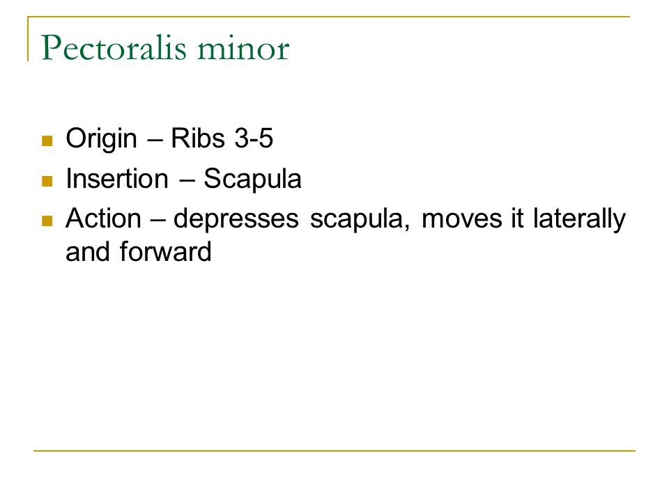 Pectoralis minor Origin – Ribs 3-5 Insertion – Scapula
