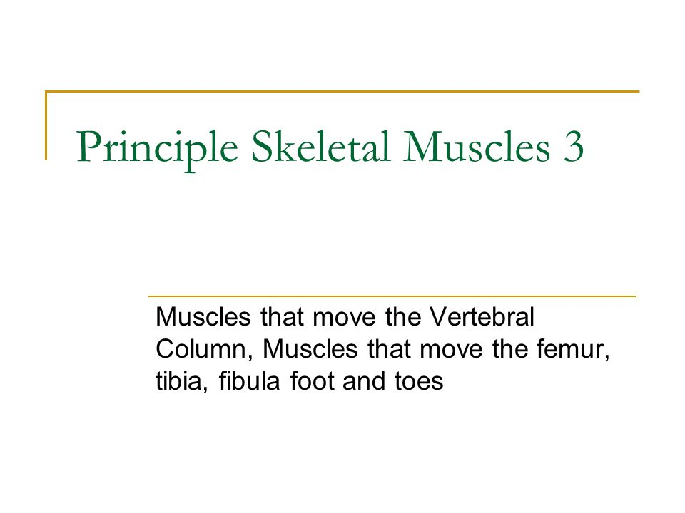 Principle Skeletal Muscles 3