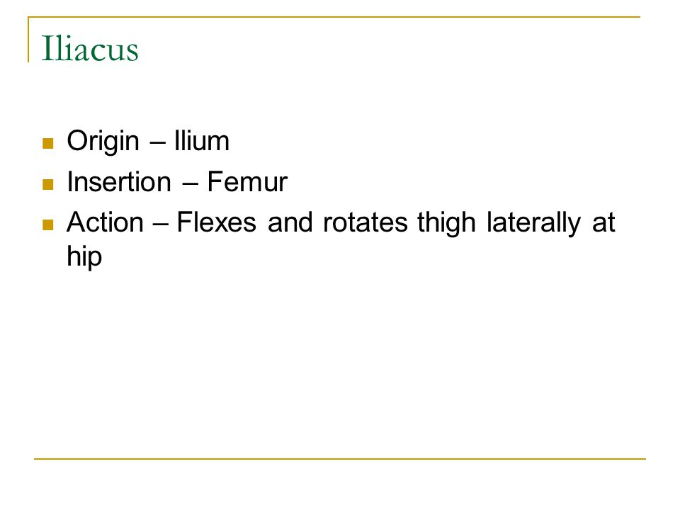 Iliacus Origin – Ilium Insertion – Femur