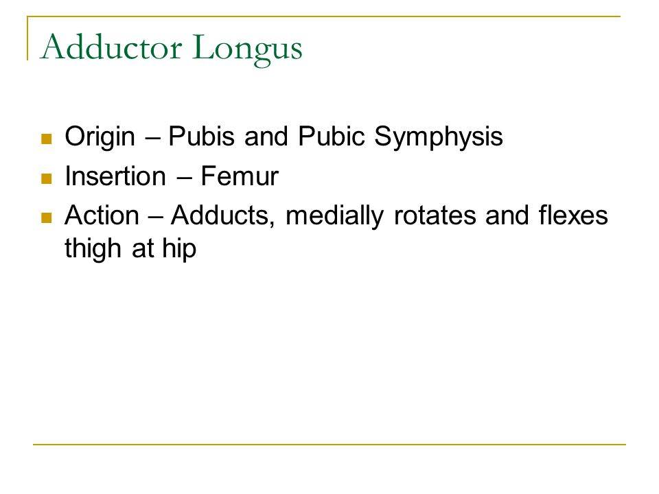 Adductor Longus Origin – Pubis and Pubic Symphysis Insertion – Femur
