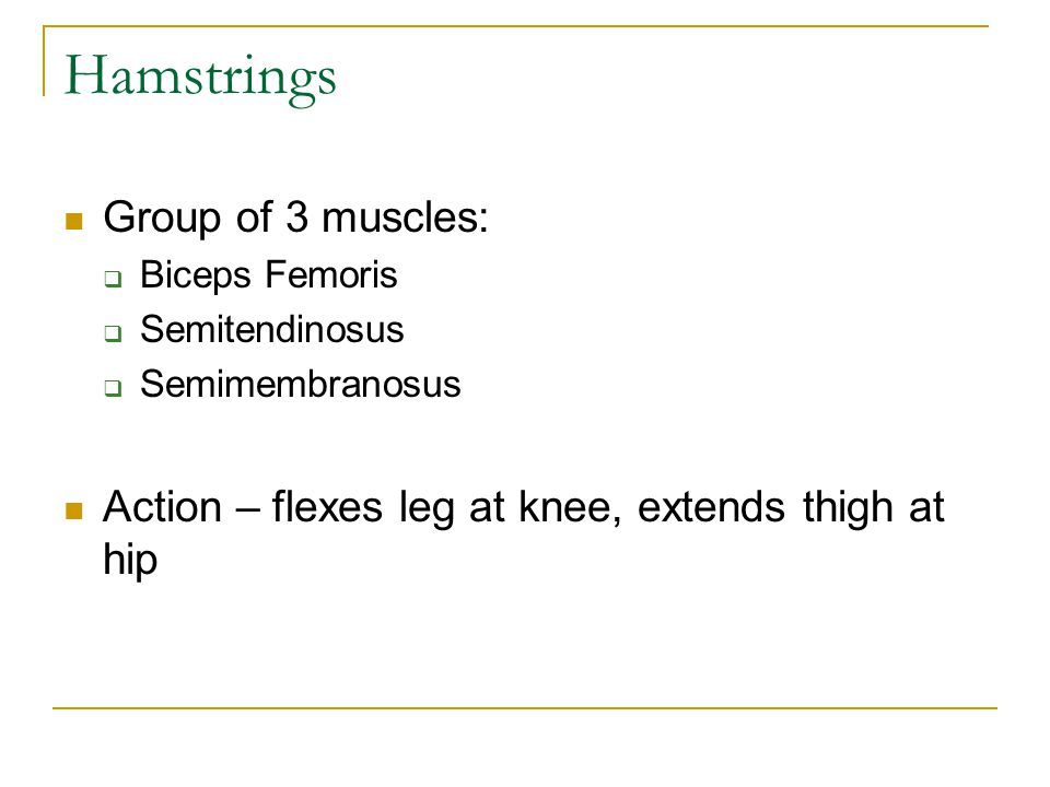 Hamstrings Group of 3 muscles: