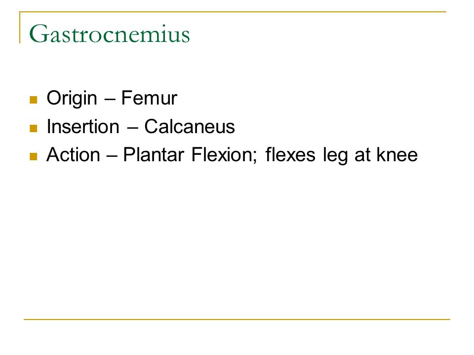 Gastrocnemius Origin – Femur Insertion – Calcaneus