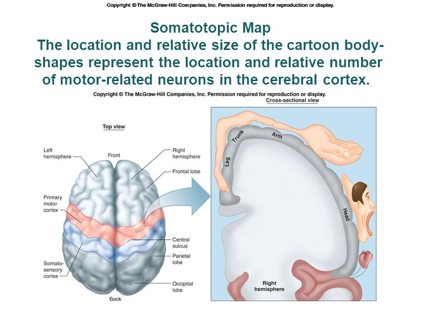 The location and relative size of the cartoon body-