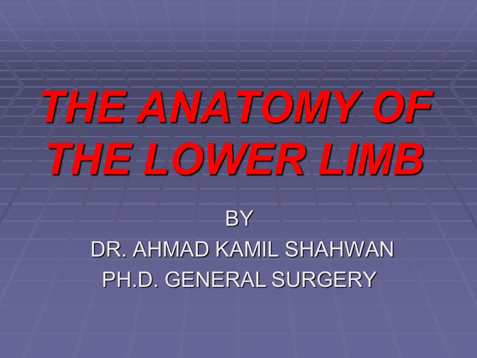 THE ANATOMY OF THE LOWER LIMB