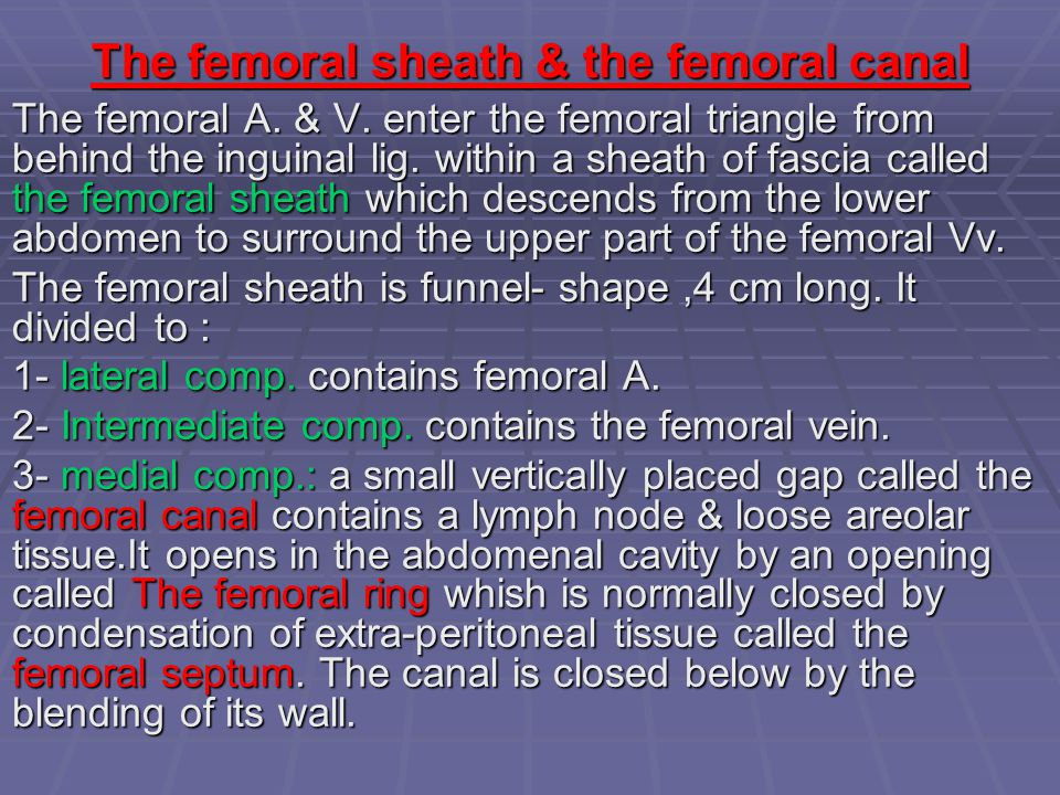 The femoral sheath & the femoral canal