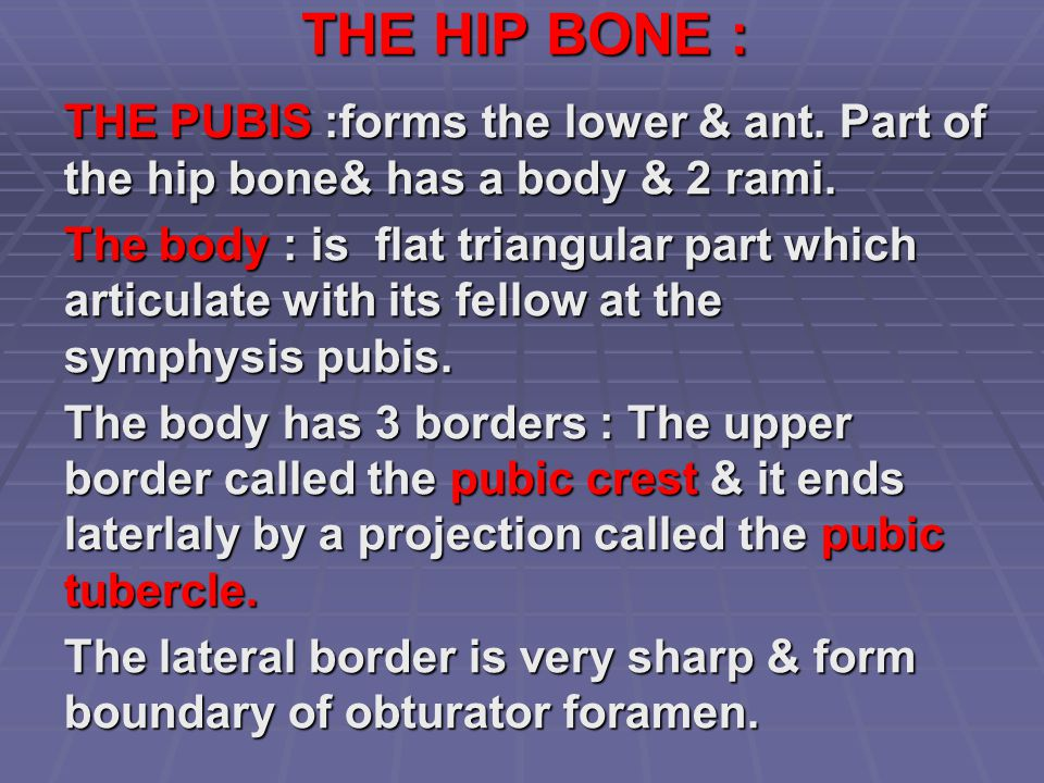 THE HIP BONE : THE PUBIS :forms the lower & ant. Part of the hip bone& has a body & 2 rami.