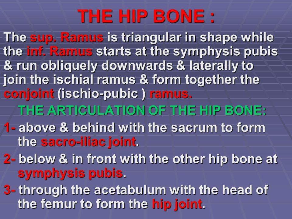 THE HIP BONE :