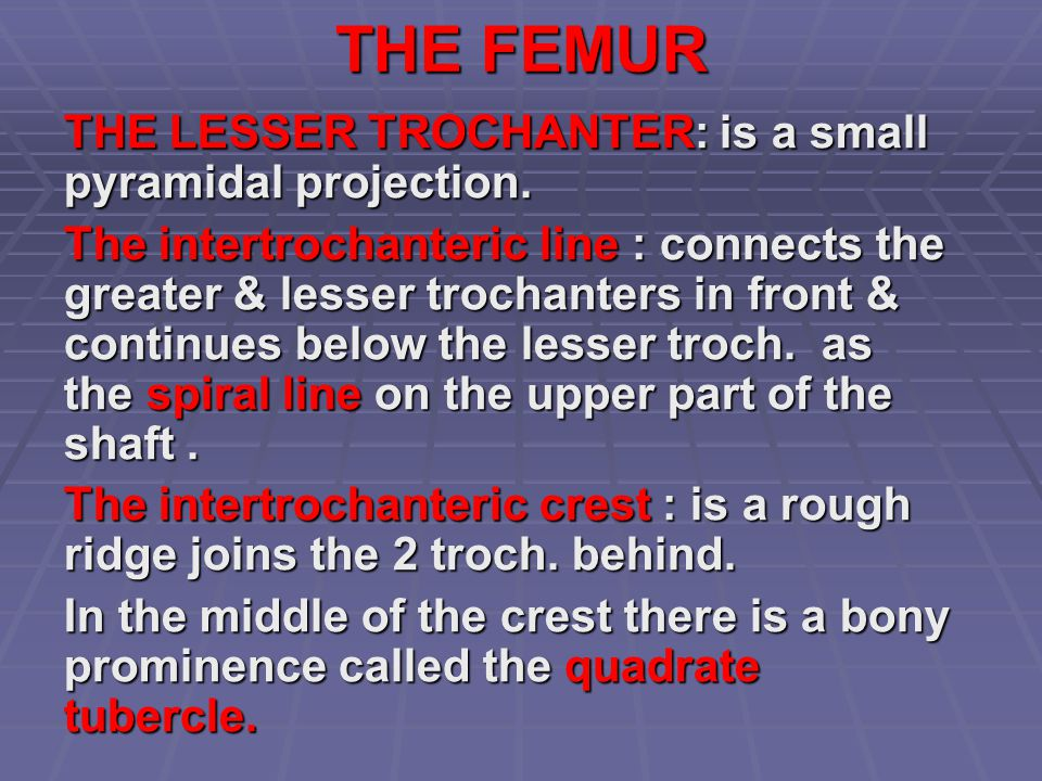 THE FEMUR THE LESSER TROCHANTER: is a small pyramidal projection.