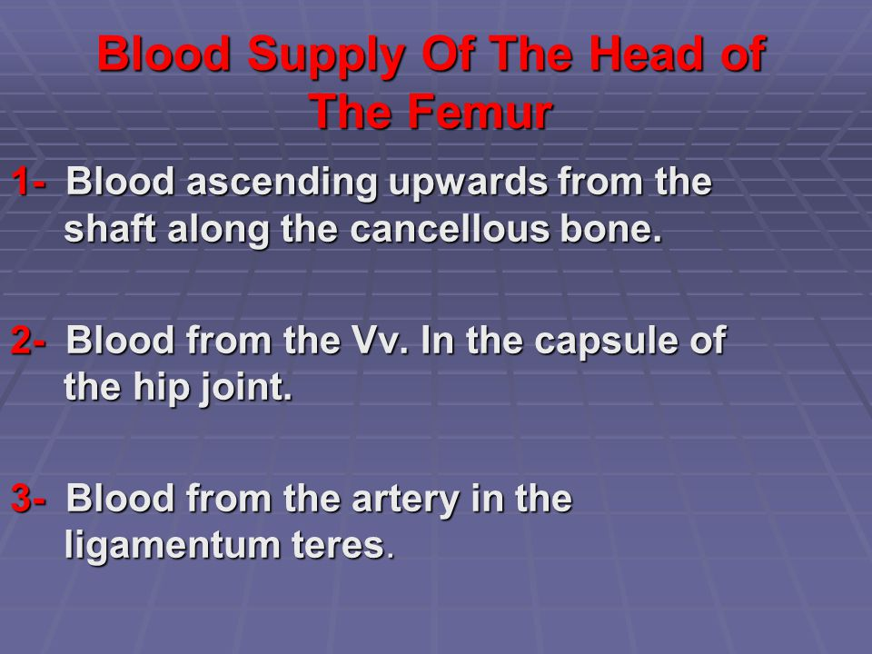 Blood Supply Of The Head of The Femur