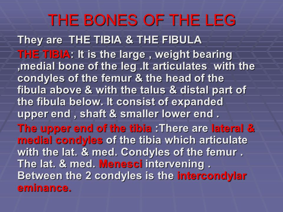 THE BONES OF THE LEG They are THE TIBIA & THE FIBULA