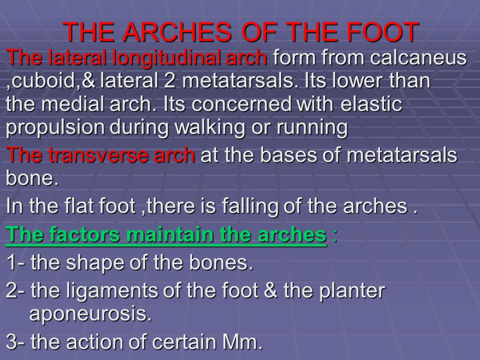THE ARCHES OF THE FOOT