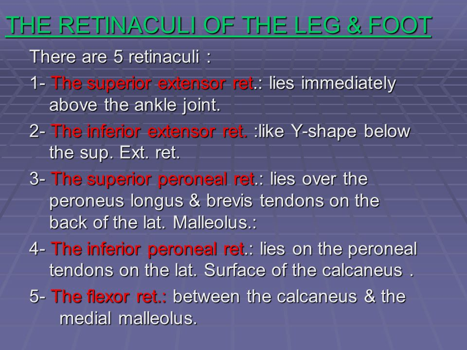 THE RETINACULI OF THE LEG & FOOT