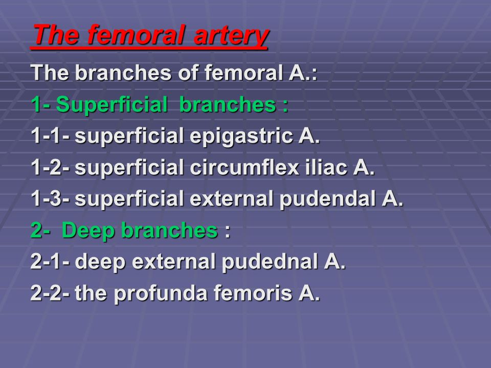 The femoral artery The branches of femoral A.: