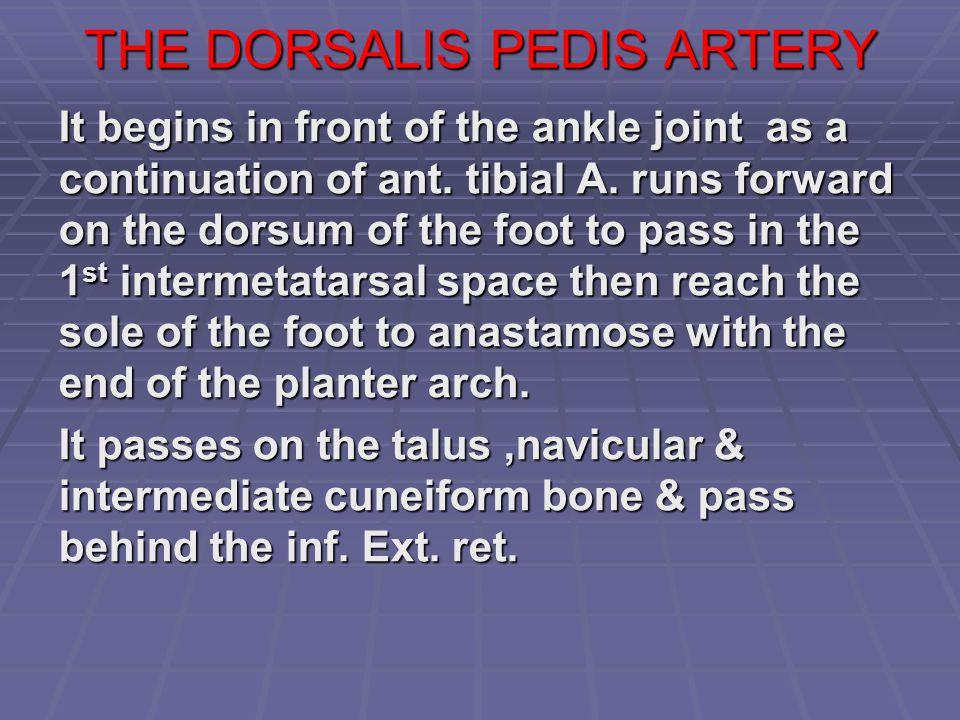 THE DORSALIS PEDIS ARTERY