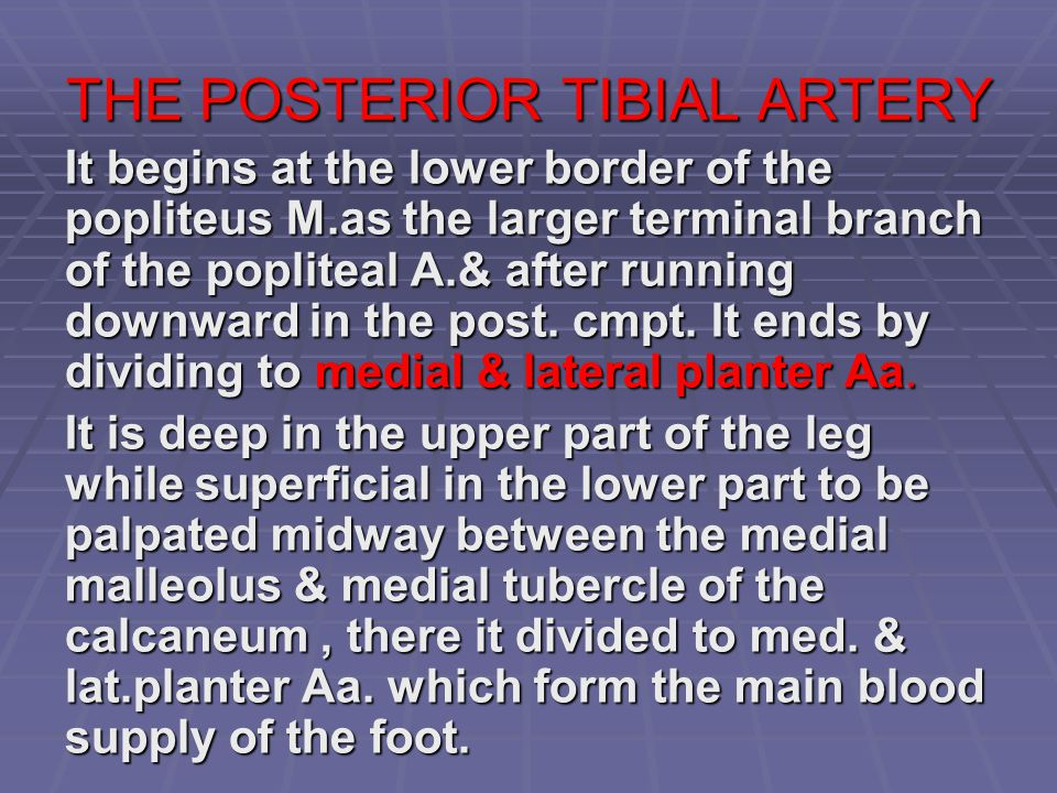 THE POSTERIOR TIBIAL ARTERY