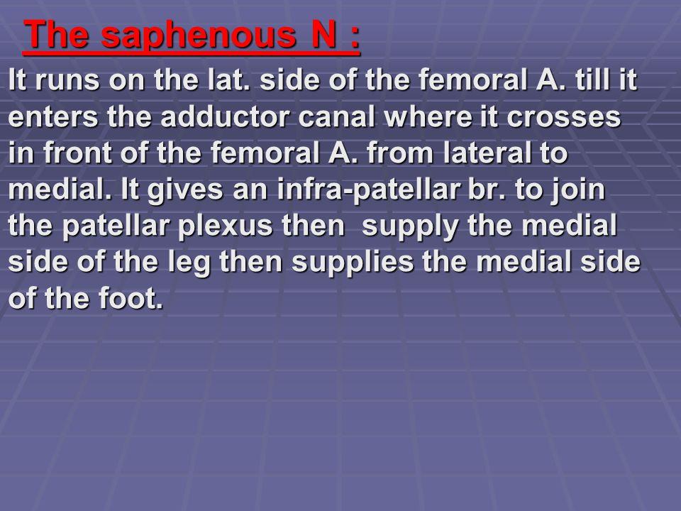 The saphenous N :