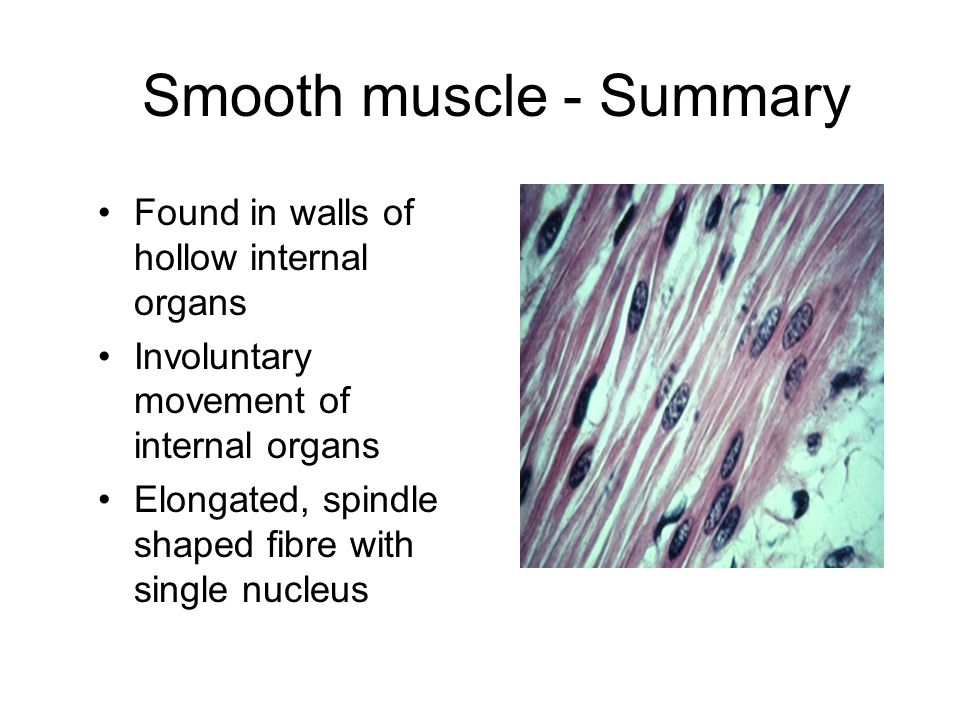 Smooth muscle - Summary