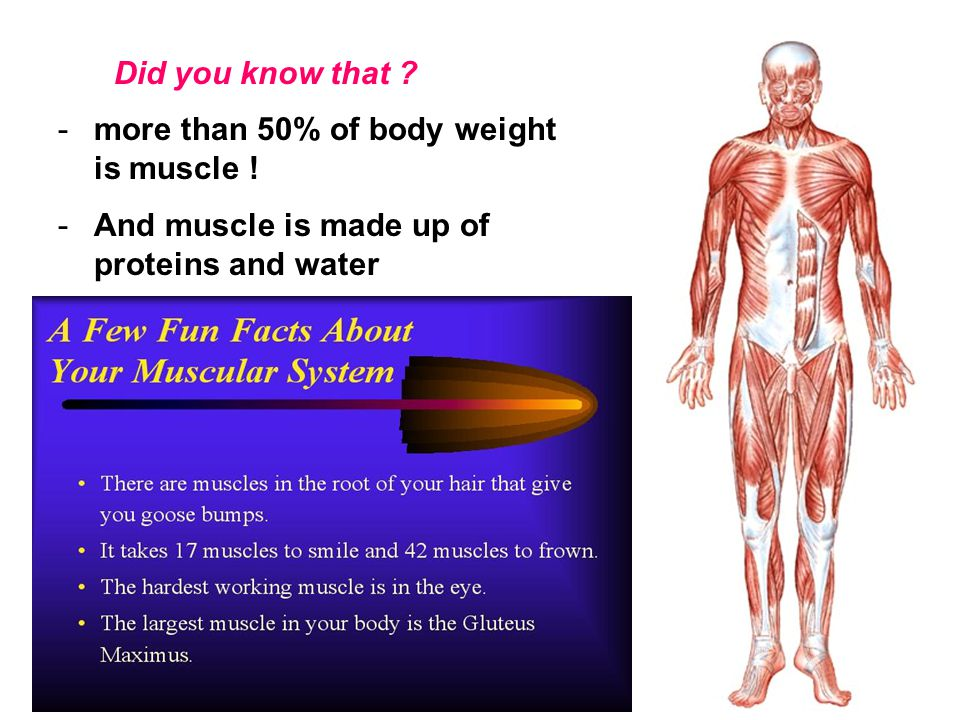 Did you know that . more than 50% of body weight is muscle .