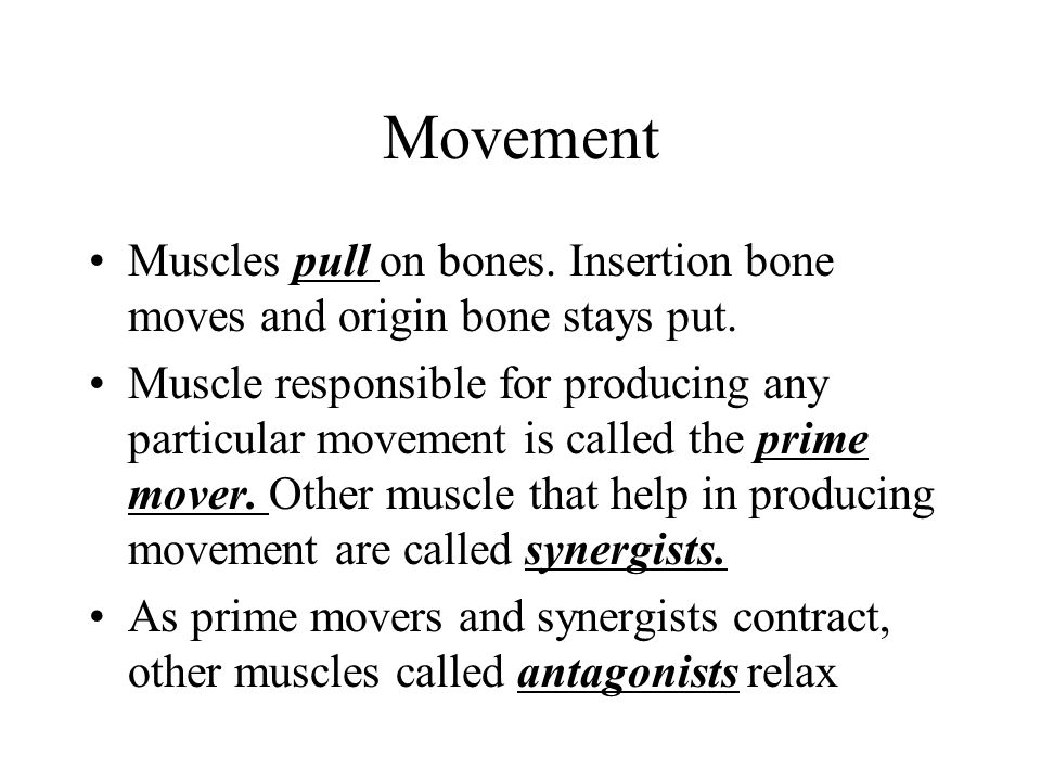 Movement Muscles pull on bones. Insertion bone moves and origin bone stays put.